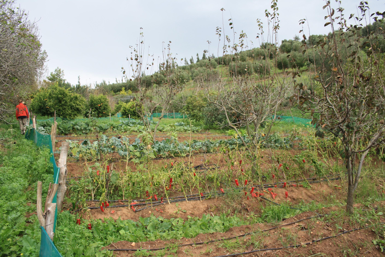 Le jardin de zineb le tour despaysans for Au jardin potager